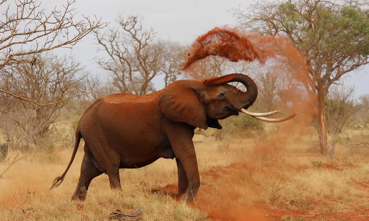 Γιατί πετάνε πύρινες μπάλες στους ελέφαντες;