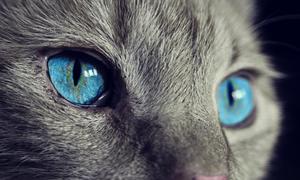 Μικρό γατάκι «επιτίθεται» σε άνδρα – Δείτε με ποιον τρόπο «σώνεται» (video)