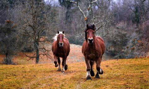 Άλογα στη θέση… αστυνομικών; Δείτε μία απίστευτη καταδίωξη!