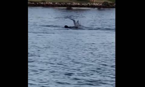 Επικό! Σκύλος και… δελφίνι κολυμπούν μαζί! (vid)