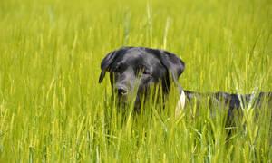 Έχασε τον σκύλο του κι όταν τον βρήκε έμεινε έκπληκτος με τους δύο καινούριους του φίλους! (vid)