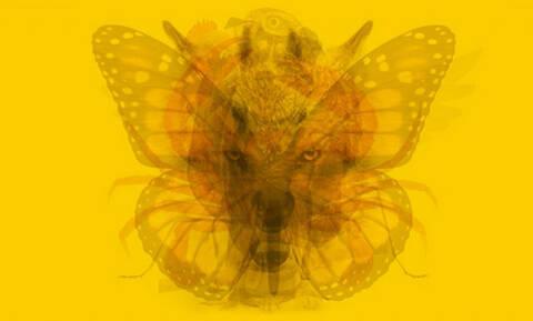 Το πρώτο ζώο που θα δεις στην φωτογραφία αποκαλύπτει την προσωπικότητά σου (pics)