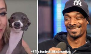 Ζώα που έχουν απίστευτη ομοιότητα με διάσημους! (part 1)