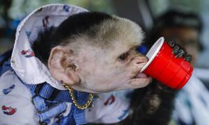 Δεν είναι σενάριο θρίλερ: Κλωνοποίησαν μαϊμούδες με άγχος, κατάθλιψη, αυπνίες και σχιζοφρένεια