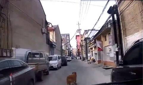 Συγκλονιστικό! Σκύλος οδηγεί τους διασώστες στο αναίσθητο αφεντικό του (vid)