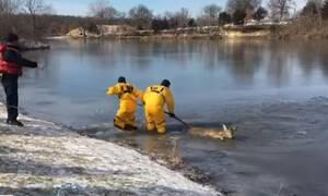 Απίστευτη διάσωση ελαφιού από παγωμένη λίμνη (vid)
