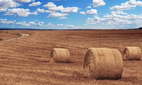 Νέο επίδομα για τους αγρότες: Ποιοι είναι δικαιούχοι