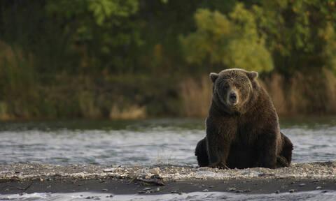 Απίστευτο! 3χρονος επιβίωσε 48 ώρες στο δάσος με τη βοήθεια... μιας αρκούδας (vid)