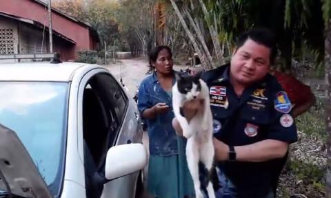 Απίστευτη διάσωση γάτας από μηχανή αυτοκινήτου (vid)