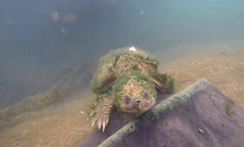 Η ηλικιωμένη χελώνα που «παίζει» με τον φακό (vid)