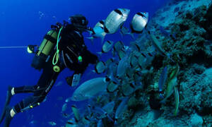 Ο καταδυτικός τουρισμός ως «χρυσή πηγή εσόδων»