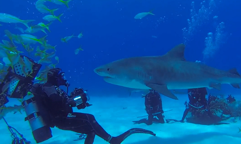 Εκπληκτικές εικόνες: Καρχαρίες παρέα με δύτες και «χαμογελούν» στην κάμερα (vid)