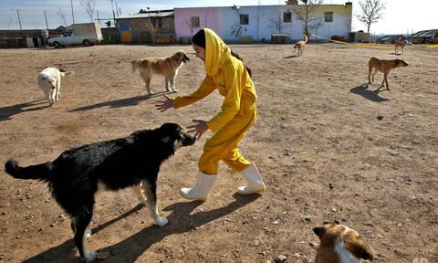 Απίστευτο! Το Ιράν απαγορεύει τους σκύλους λόγω του Ισλάμ!