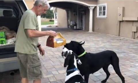 Τρελό γέλιο! Τα σκυλιά τρολάρουν τον ιδιοκτήτη τους (vid)