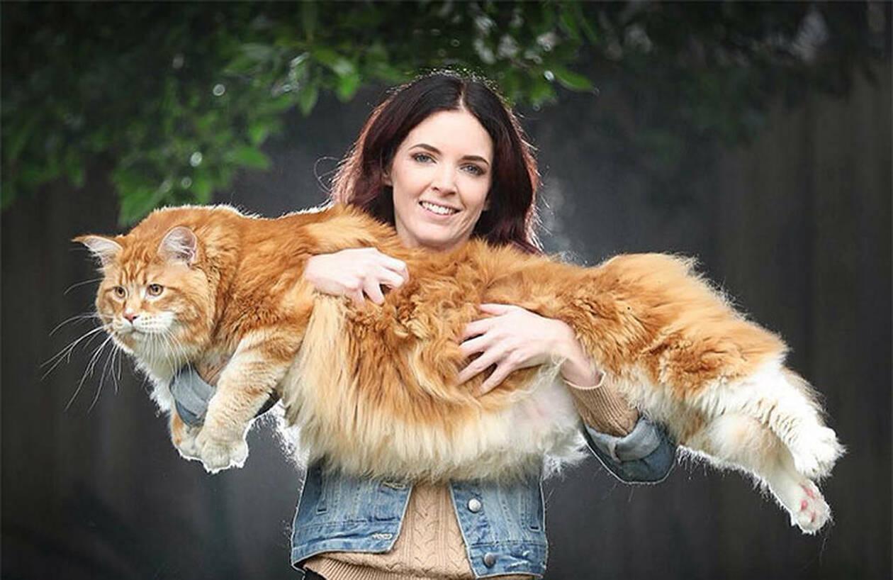 bf9d5c4d3abf Πήραν ένα γατάκι για συντροφιά αλλά δεν ήξεραν ότι θα εξελιχθεί στη ...