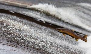 ΣΟΚ στην Hλεία: Νεκρά ψάρια στην παραλία στο Παλούκι (pic)