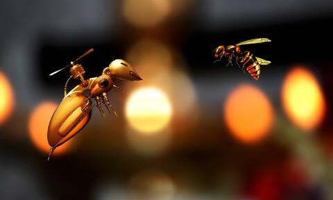 Αλέξη Τσίπρα όποιος έχει τη μύγα, μυγιάζεται - Κι όποιος έχει τη σφήκα, σφίγγεται...