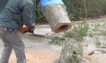 Εκοβε κορμό δέντρου με το αλυσοπρίονο! και έπαθε πλάκα με αυτό που του πετάχτηκε (vid)