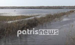 Καιρός: Η Αγουλινίτσα έγινε ξανά λίμνη και οι κτηνοτρόφοι «ναυαγοί»! (pics)