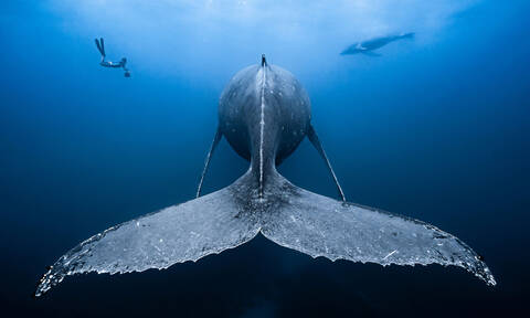 Η άγρια ομορφιά της θάλασσας: 40 φωτογραφίες που θα «πλημμυρίσουν» το είναι σου με δέος
