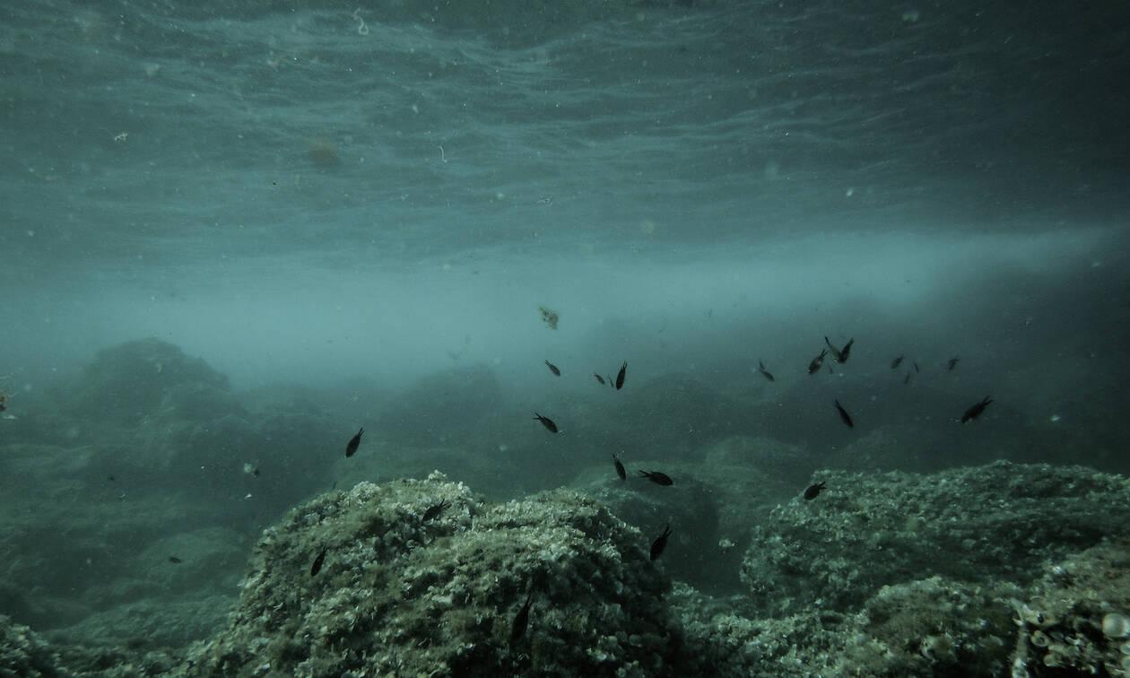 Παράσιτο - «φονιάς» έφτασε στο Αιγαίο και «σπέρνει» θάνατο και καταστροφή στο βυθό της θάλασσας