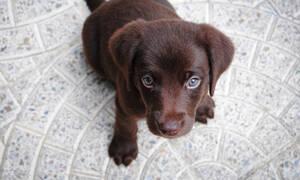 Απίστευτο: Κτηνίατρος διακινούσε ηρωίνη μέσω… κουταβιών!