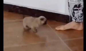 «Έριξε» το διαδίκτυο – Δείτε το κουταβάκι που χορεύει και… τρελαίνει! (video)
