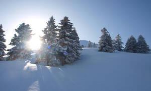 «Πλημμύρισε» με κόσμο το χιονοδρομικό κέντρο στα Καλάβρυτα (vid)