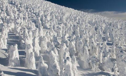 Τα «τέρατα χιονιού» της Ιαπωνίας (photos)