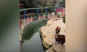 Τάιζε αρκούδες και αντί για μήλο πέταξε το… κινητό του! (vid)