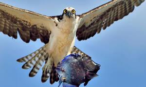 «Φτερωτός τρόμος»: Τέτοιες φωτογραφίες δεν έχετε ξαναδεί και αυτό είναι υπόσχεση