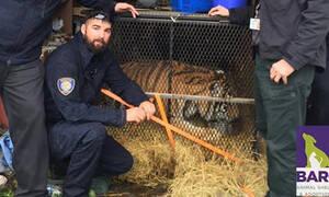 Πήγε να στρίψει τσιγάρο σε εγκαταλελειμμένο γκαράζ και βρήκε μέσα μια τεράστια... τίγρη! (pic)