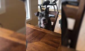 Αυτός ο σκύλος νίκησε τον καρκίνο και δείτε πώς το γιόρτασε! (vid)