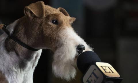 Σκυλιά και φωτογραφικός φακός: Μια ιστορία... αγάπης