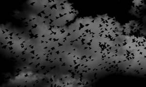 Φθιώτιδα: Σμήνος πουλιών προκάλεσε τροχαίο