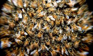 Οι μέλισσες ξέρουν μαθηματικά και κάνουν πράξεις!