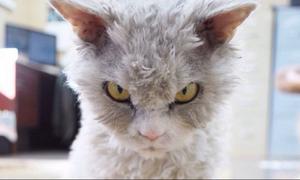 Αυτή είναι η πιο… οργισμένη γάτα του διαδικτύου! (pics+vid)