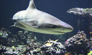 Το μεροκάματο του τρόμου! Κολυμπώντας ανάμεσα σε καρχαρίες (vid)