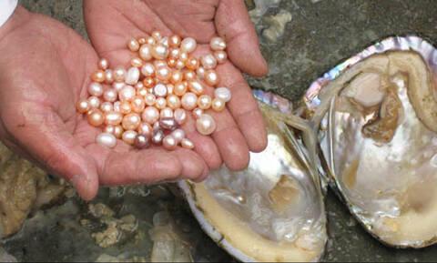 Ψαράς ανοίγει όστρακο και αυτό που βλέπει τον κάνει ζάμπλουτο! (vid)