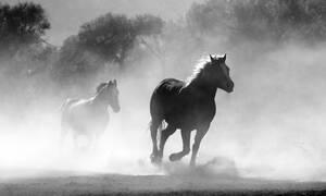 Σαντορίνη: Παραμελούσε τα άλογα της φάρμας του και συνελήφθη για κακοποίηση ζώων