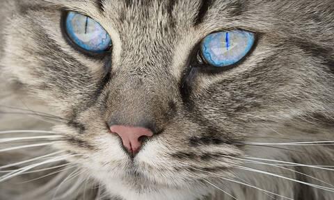 Λαμία: Έπεσε ξύλο για τα μάτια μιας... γάτας - Στο νοσοκομείο ένας ηλικιωμένος (pics)