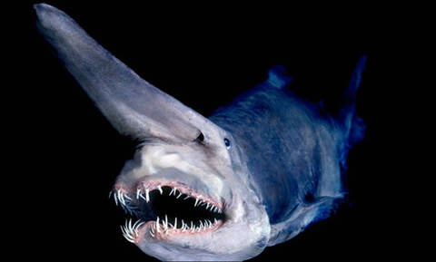 Βγαλμένα από εφιάλτη: Αυτά είναι τα πιο τρομακτικά πλάσματα του βυθού (Pics)