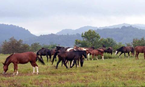 Απίστευτη κτηνωδία στην Θεσπρωτία - Σκότωσαν 6 άλογα με κυνηγετικό όπλο