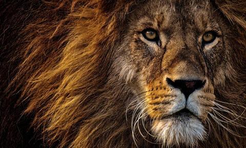 ΣΟΚ: Λιοντάρι κατασπάραξε 22χρονη σε ζωολογικό κήπο