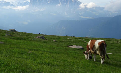 Αυστρία: Νεκρή τουρίστρια από επίθεση αγελάδας - Πρόστιμο «μαμούθ» σε κτηνοτρόφο