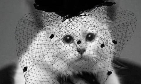 Η γάτα του Λάγκερφελντ είναι μια θλιμμένη διάσημη Instagrammer (pics)
