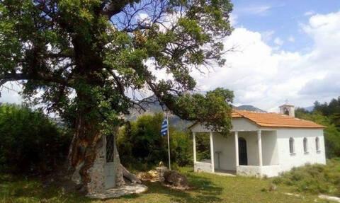 Το εκκλησάκι του Αγίου Παΐσιου που είναι χτισμένο σε δέντρο 300 ετών!