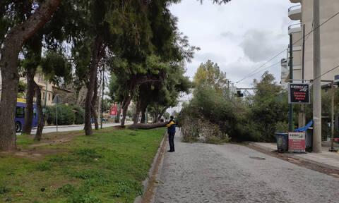 Κακοκαιρία «Ωκεανίς»: Έκλεισε κεντρική λεωφόρος στο Χαλάνδρι από πτώση δέντρου - Διακοπή ρεύματος