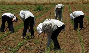 Αυξάνονται οι κρατικές ενισχύσεις στους αγρότες - Δείτε από πότε θα ισχύσουν