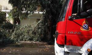 Непогода по-гречески: за сутки в спасательные службы поступило 280 вызовов